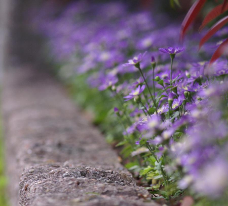 Flower In The Sun ♪ by Janis Joplin_c0057800_18502087.jpg