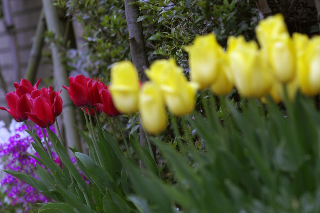 Flower In The Sun ♪ by Janis Joplin_c0057800_185560.jpg