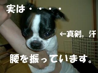 b0056096_2249441.jpg