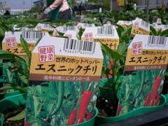 ホームセンターで野菜苗購入_b0054727_161360.jpg