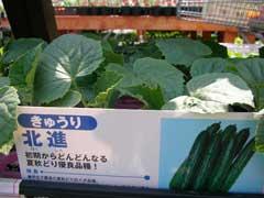 ホームセンターで野菜苗購入_b0054727_171561.jpg