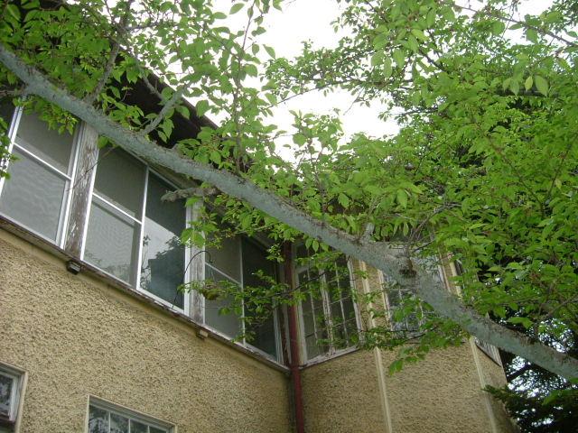 ヴォーリズ建築~記念病院を訪ねて_b0055171_12322591.jpg