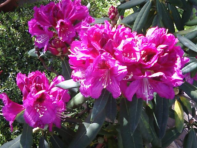 【太陽に応える花、風で踊る花。】by KTa★brasil_b0032617_15541929.jpg