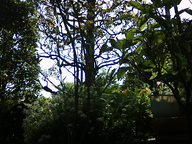 【太陽に応える花、風で踊る花。】by KTa★brasil_b0032617_15543857.jpg