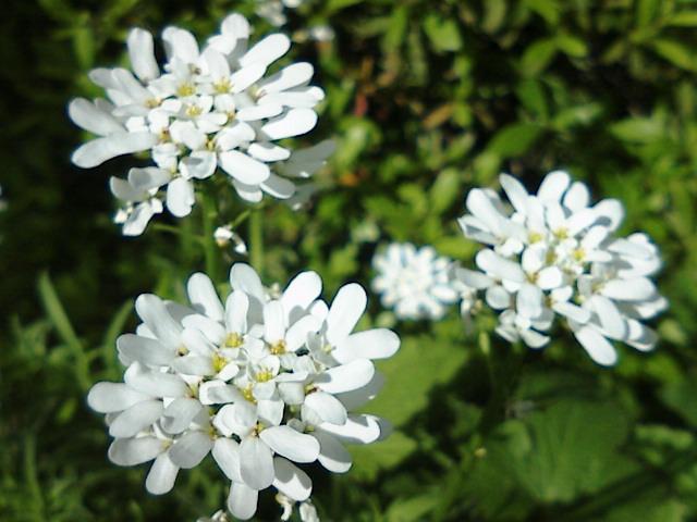 【太陽に応える花、風で踊る花。】by KTa★brasil_b0032617_1555191.jpg