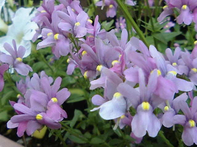 【太陽に応える花、風で踊る花。】by KTa★brasil_b0032617_15553373.jpg