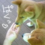 b0057675_11361212.jpg