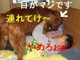 c0049339_1075331.jpg
