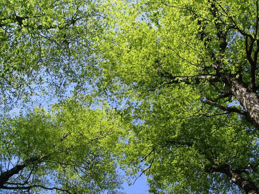 新緑のブナ林で鳥見&撮影_d0028272_2020266.jpg