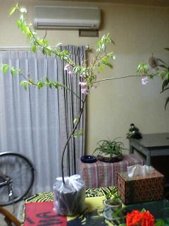 十月桜_a0028804_14454514.jpg