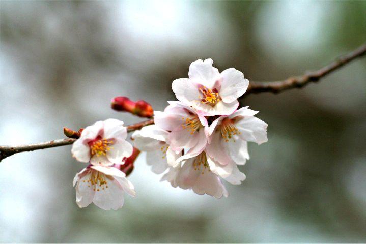 花だより Ⅳ_d0012134_1259778.jpg