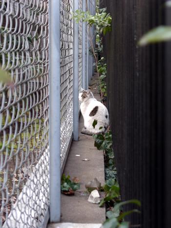 151 猫の散歩道 #2_c0001773_275474.jpg