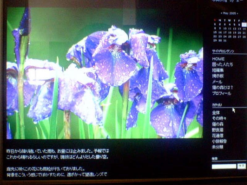 b0022221_1771515.jpg