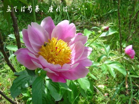 b0066985_14162510.jpg