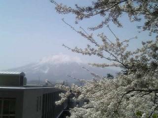 桜_a0028804_2004069.jpg