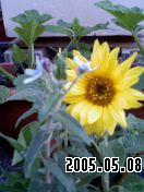 b0026467_050321.jpg