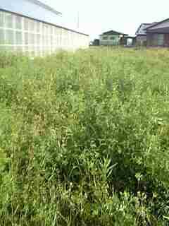 草刈り_c0024018_1564431.jpg