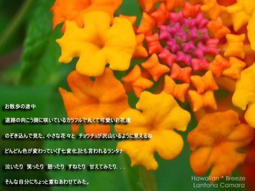 c0013726_625046.jpg