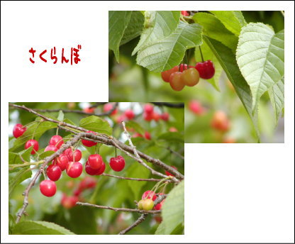 b0066985_11243887.jpg