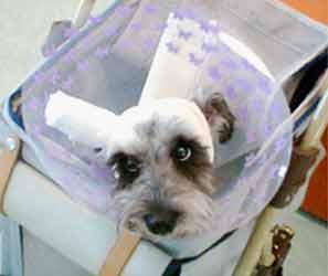 看板犬、只今入院中・・・_b0017736_22154383.jpg