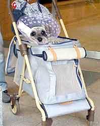 看板犬、只今入院中・・・_b0017736_2216992.jpg