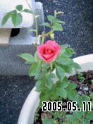 b0026467_23161889.jpg