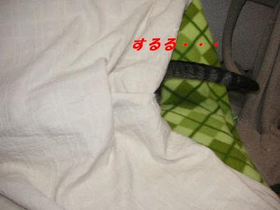 c0032073_9354433.jpg
