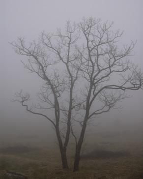 5月12日 霧の榛名湖_a0001354_17534660.jpg