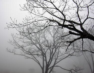 5月12日 霧の榛名湖_a0001354_17535943.jpg