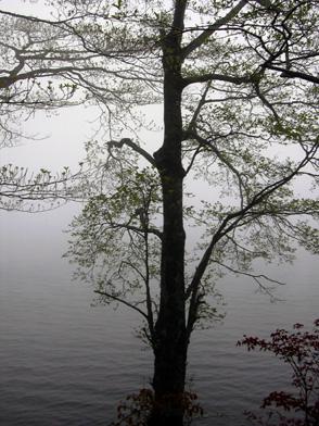 5月12日 霧の榛名湖_a0001354_17592832.jpg