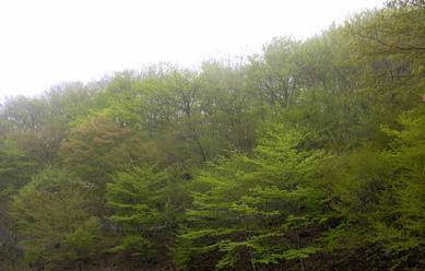 5月12日 霧の榛名湖_a0001354_183276.jpg