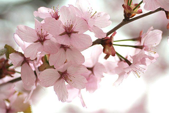 桜だより おまけ編 (^_^)v_d0012134_1729329.jpg