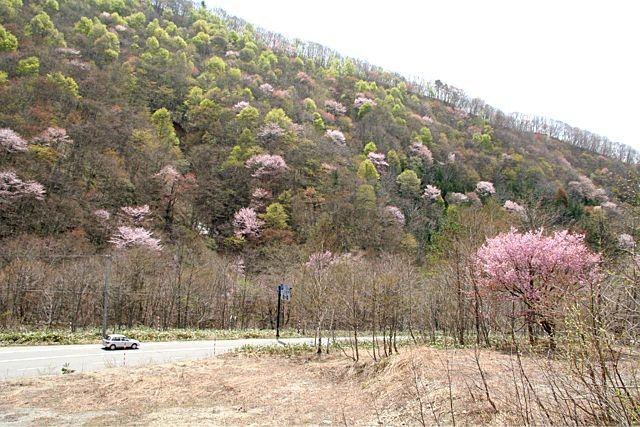桜だより おまけ編 (^_^)v_d0012134_1745312.jpg