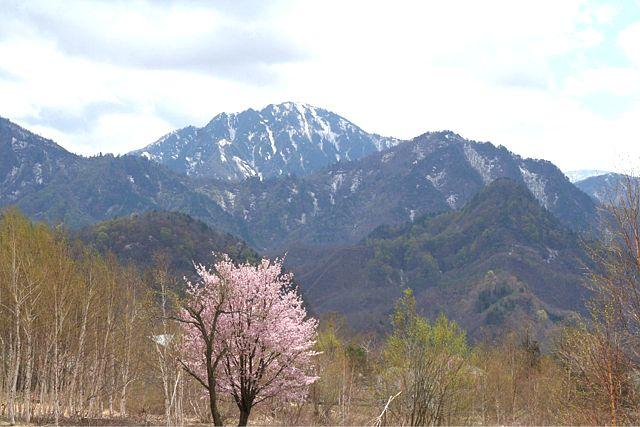 桜だより おまけ編 (^_^)v_d0012134_1757360.jpg
