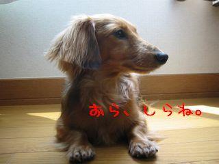 b0044804_12215687.jpg