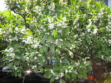 オレンジの花_d0046025_223462.jpg