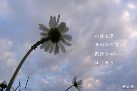 a0002073_7103781.jpg