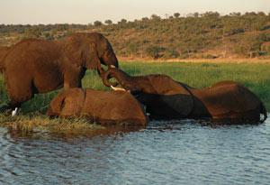 南アフリカでサファリ&ワイン三昧_b0053082_4365910.jpg