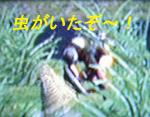 b0011910_17155528.jpg