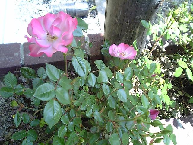 花、はな_c0060919_1714397.jpg