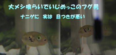 a0014770_0102111.jpg
