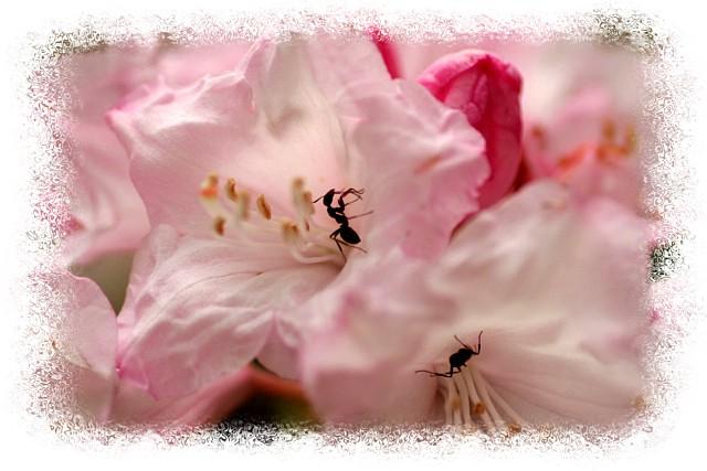 花だより Ⅷ_d0012134_039985.jpg