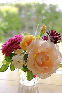 Rose_b0045855_11222524.jpg