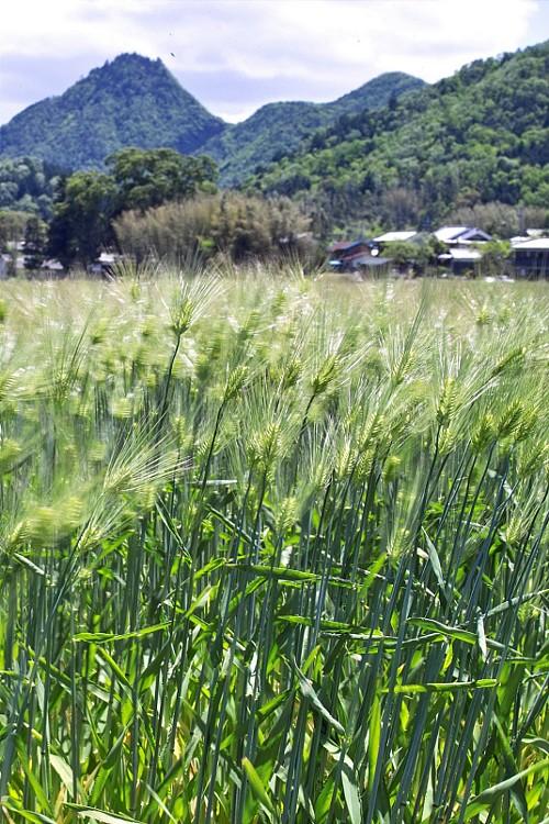 麦畑で..._c0042324_9114830.jpg