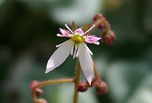 この花の名前…_b0045855_11574794.jpg