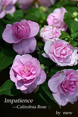 この花の名前…_b0045855_11591489.jpg