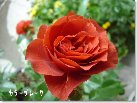 b0066985_19533273.jpg