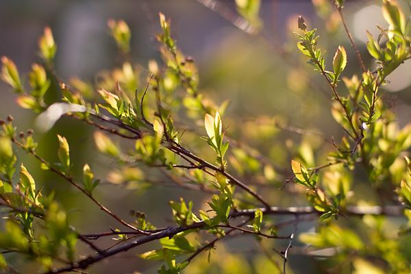 新緑の高原に陽は傾きて・・・_c0048494_11424479.jpg