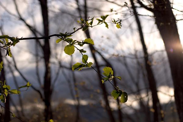 新緑の高原に陽は傾きて・・・その2_c0048494_15261914.jpg
