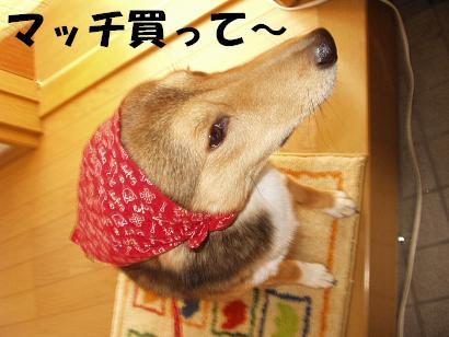 d0032004_20102271.jpg